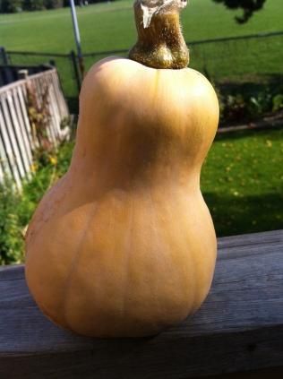 Squash from my garden