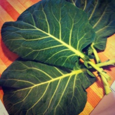 Collards from my garden